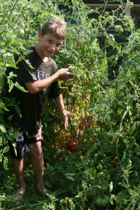 Matthew and his hoegrown toMATTo